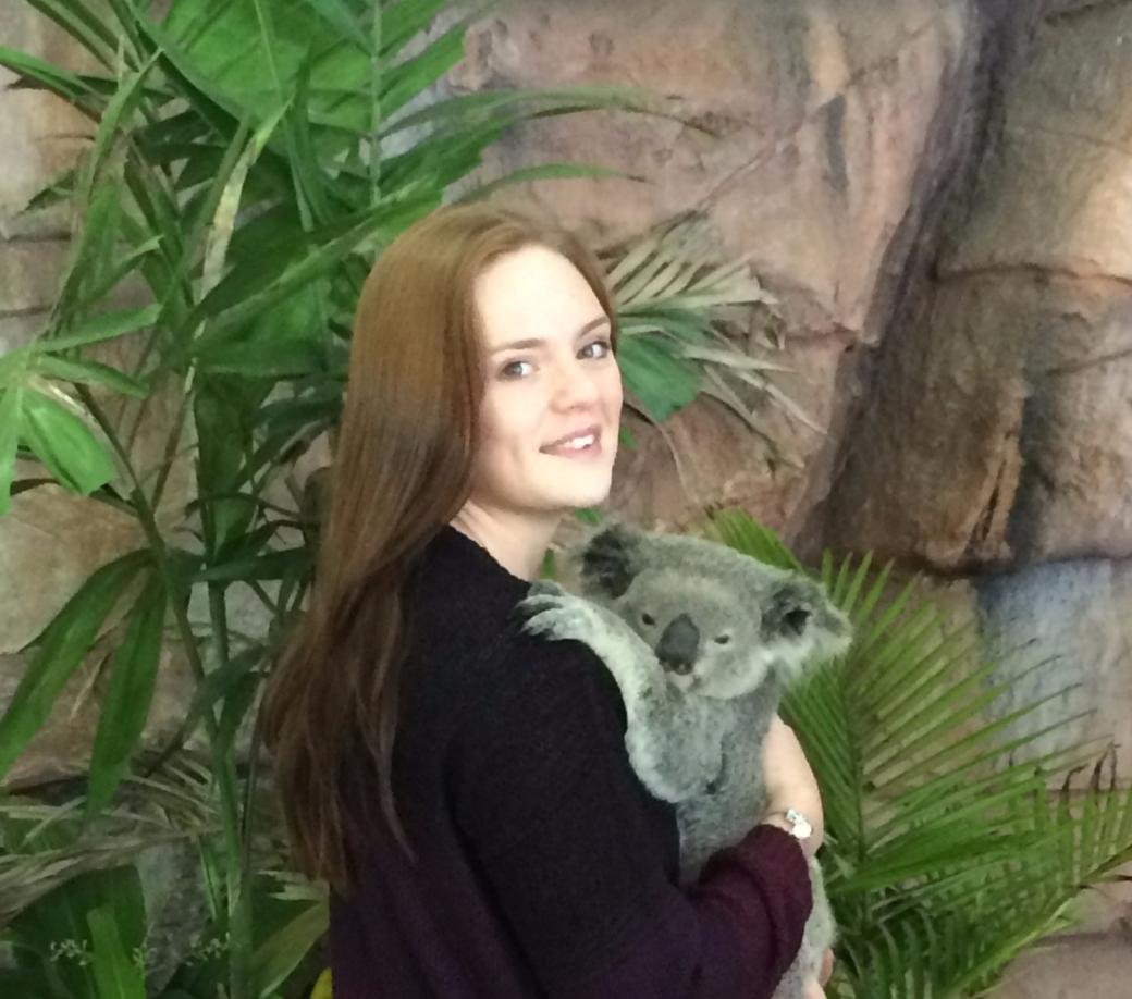 koala, australia, travel